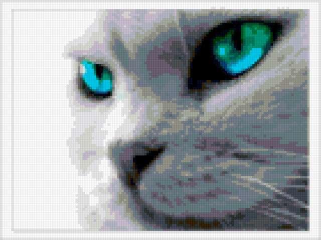 Кот с голубыми глазами,