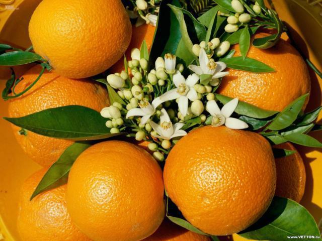 К схеме вышивки «Апельсины»