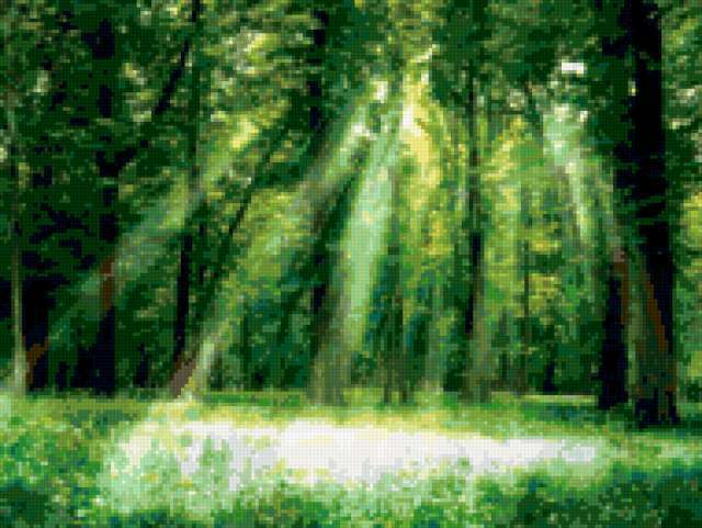 Magical forest,