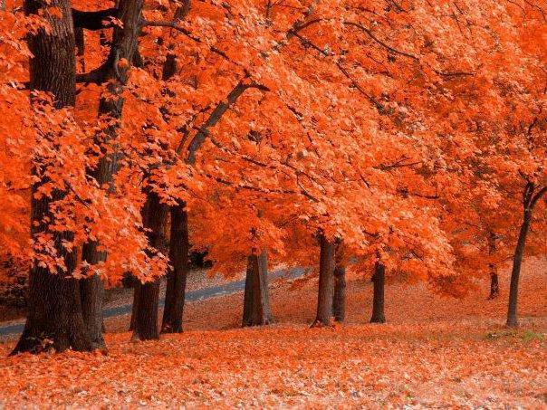 Золотая осень, осень