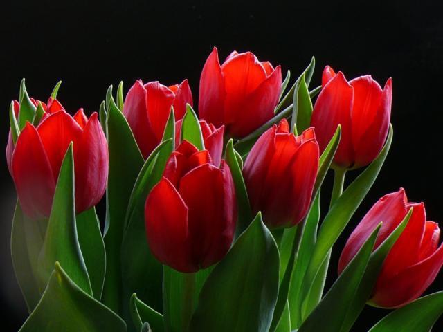Тюльпаны, оригинал