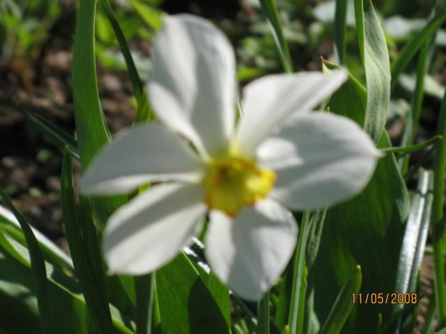 Нарцисс, оригинал