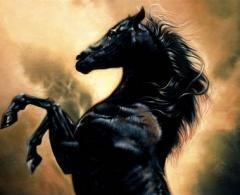 The_Black_Stallion, Животные