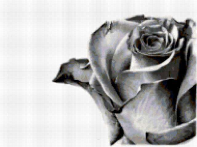 Черно-белая роза, предпросмотр