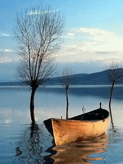Lake_With_A_Boat, цветы