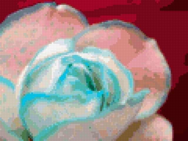 Бело-голубая роза