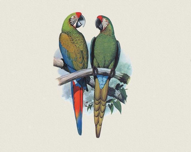 Пара попугаев ара, оригинал