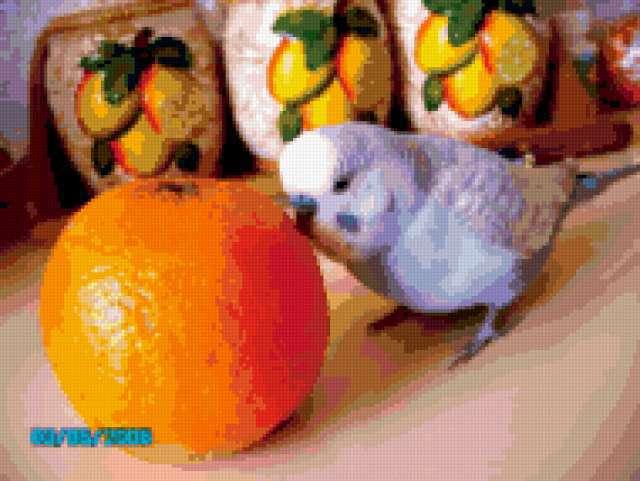Кузя и апельсин, предпросмотр