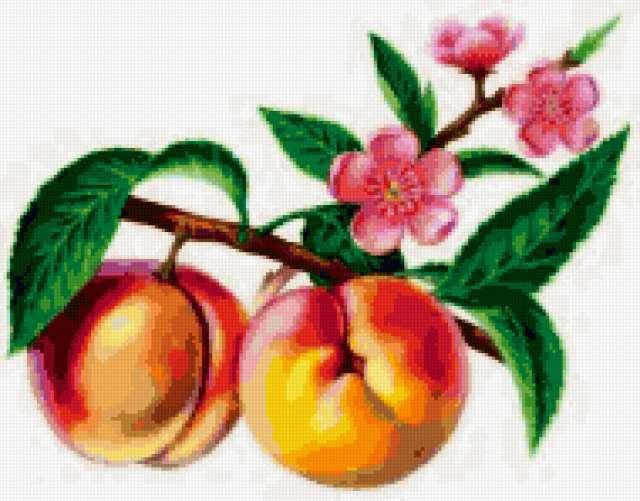 Персик, природа