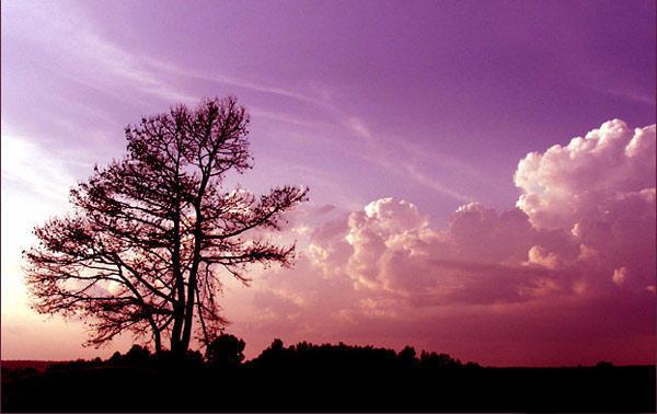 Розовое небо, оригинал