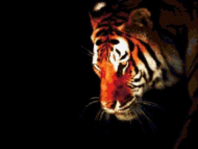 Тигр на чёрном фоне,