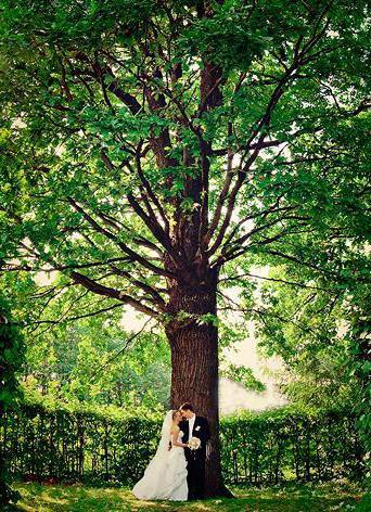Дерево счастья, оригинал