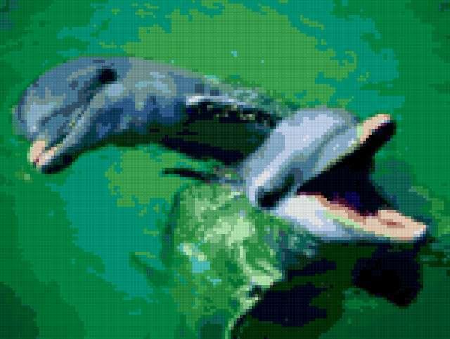 два дельфина, предпросмотр