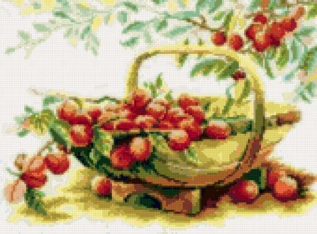 Корзина с персиками, фрукты