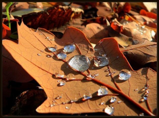 Осень дубовый лист, оригинал