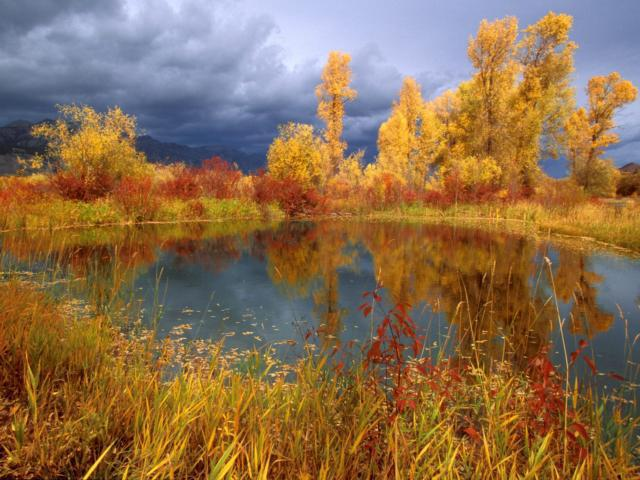 Золотая осень, оригинал