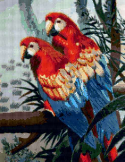 Попугаи, предпросмотр