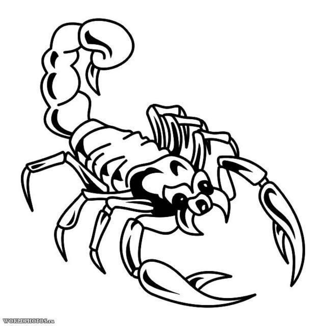 Скорпион черно-белый, оригинал