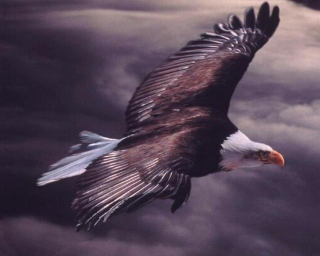 Птиська орел, оригинал