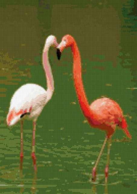 Фламинго, предпросмотр