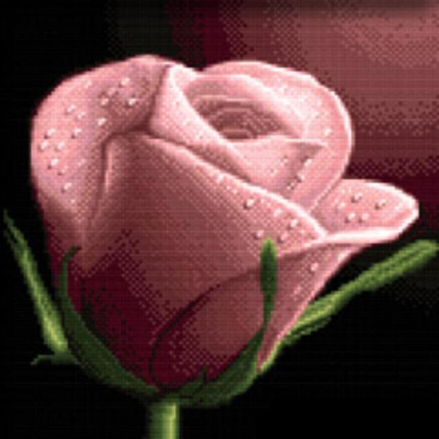Розовая роза, оригинал