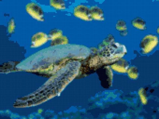 Черепаха, предпросмотр