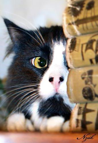 Кот ученый, книги