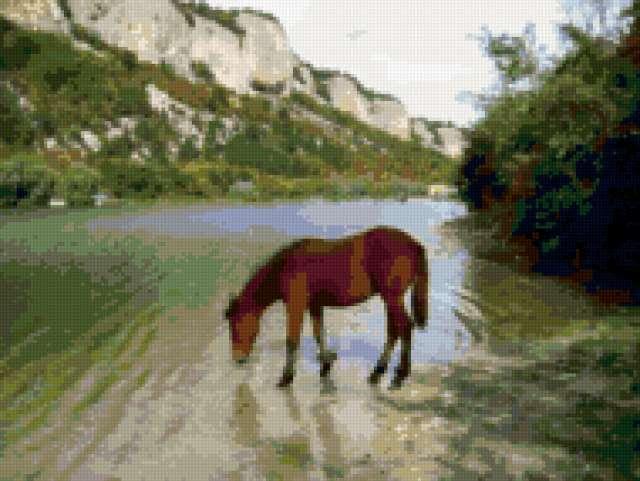 На водопое, лошадь