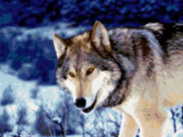 Волк в лесу зимой,