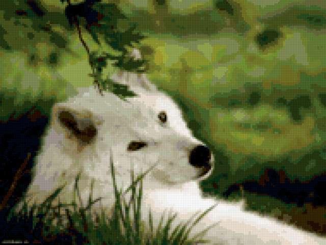 Волк отдыхает, предпросмотр