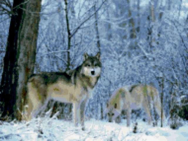 Волки в лесу, предпросмотр
