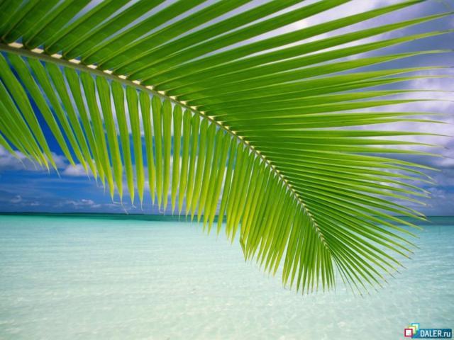 Лист пальмы, оригинал