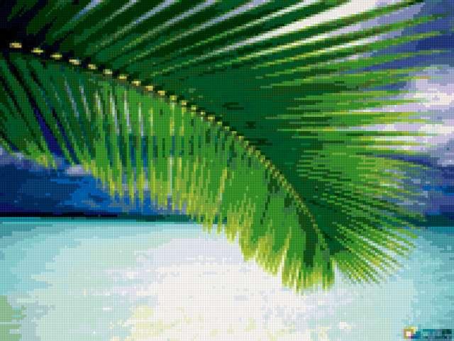 Лист пальмы, предпросмотр