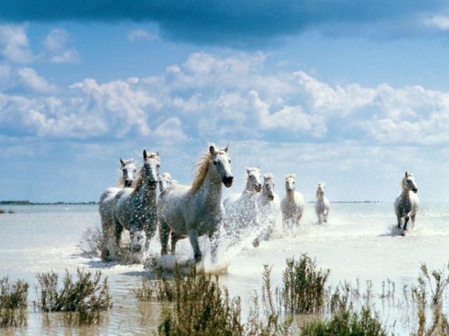 Табун, лошади, снег