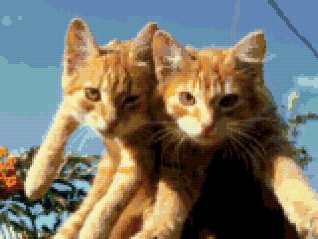 Рыжие котята, предпросмотр