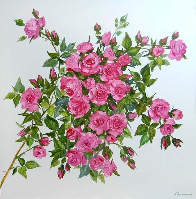 Ветка розы, цветы, розы