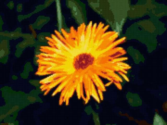 Желтый цветок, предпросмотр