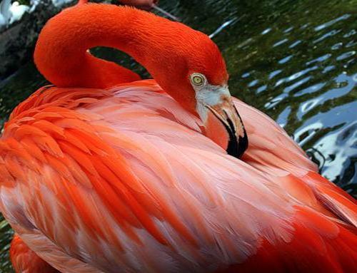 К схеме вышивки «Фламинго» нет