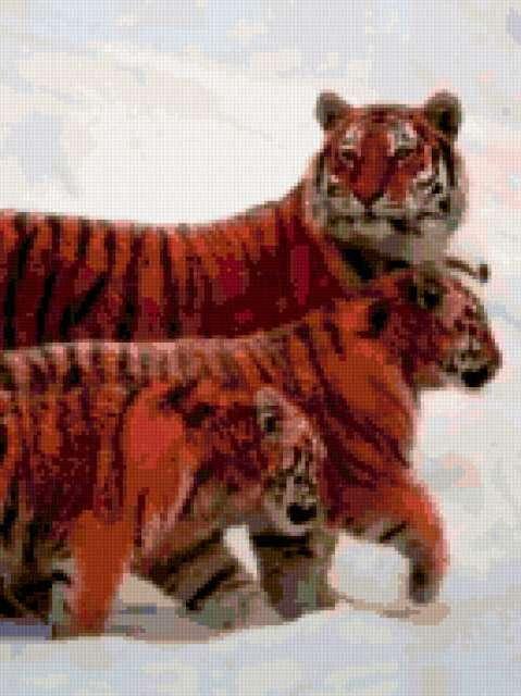 семья тигров, предпросмотр