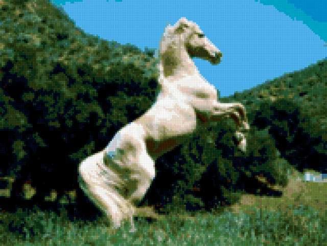 Белая лошадь в лесу,