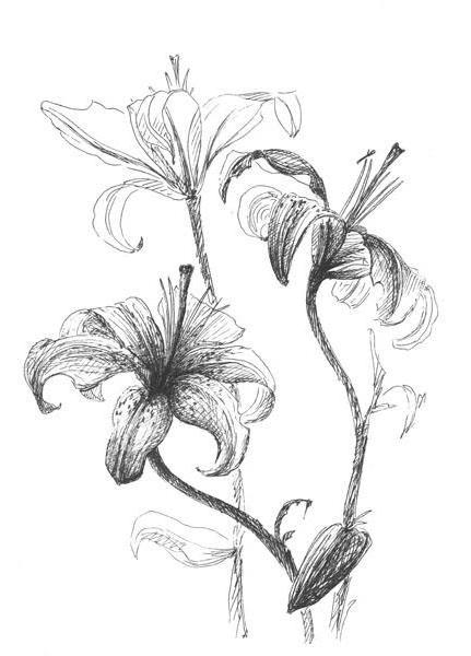 Монохромные лилии, оригинал