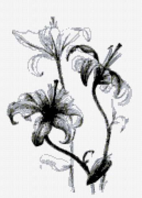 Монохромные лилии