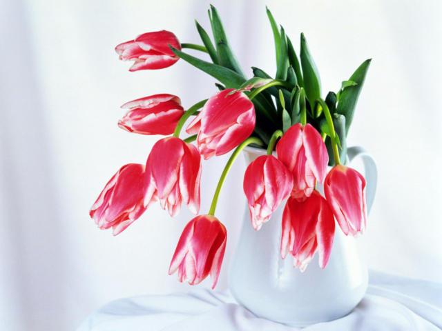 натюрморт, цветы,