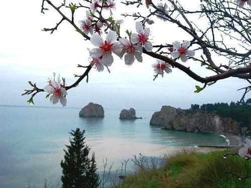 Весна в Крыму, оригинал