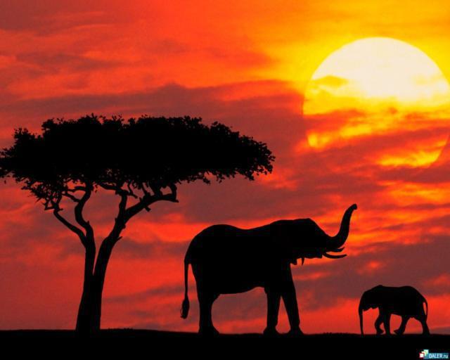 Слоны, слон, саванна, африка,