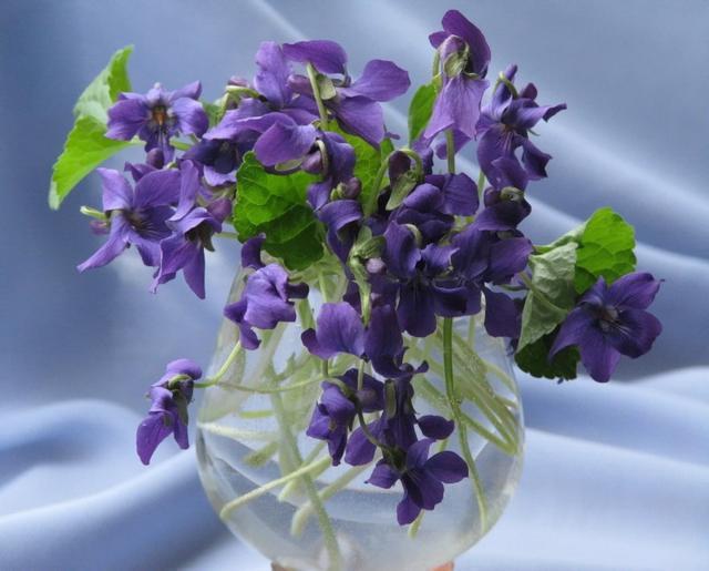 Синие цветы 2, оригинал