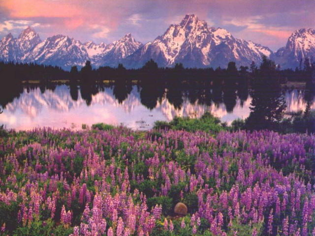 Альпийский луг, оригинал