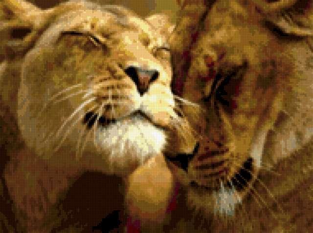 Львы Нежность, предпросмотр