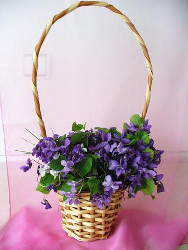 Фиалки, цветок, букет