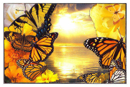 Хоровод, бабочки